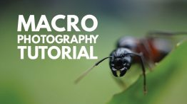 آموزش عکاسی ماکرو
